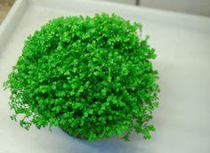 マンションの【窓のないトイレ】で育てられるおすすめ観葉植物 | 家庭菜園インフォパーク