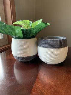 Indoor Flower Pots, Indoor Planters, Planter Pots, Succulent Pots, Succulents, Thomson Pottery, Outdoor Pots, Modern Planters, Fall Plants