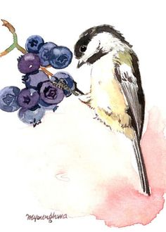 ACEO Limited Edition 2/25 - A berry lover, Chickadee  Art print of an ORIGINAL ACEO watercolor painting, Gift for bird lovers