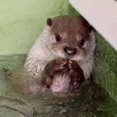 Otter Is Up to Something