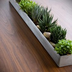 Love this stainless trough for succulents!