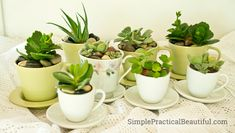 I planted succulents in tea cup pots as a charming and practical gift to give to some of my good friends. They were pretty simple to make and really cute.