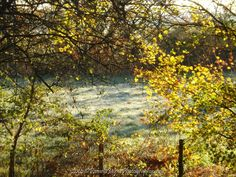First frost of the year December '14 https://www.facebook.com/PamelaJaynePhotography