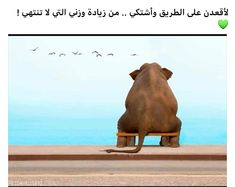 Arabic Jokes, Venus, Fashion Outfits, Words, Funny, Quotes, Poster, Humor, Quotations