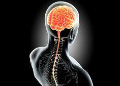 Illustration Of Human Internal Organic - Brain. Brain Nervous System, Brain Memory, Cardiology, Anatomy, Illustration, Reiki, Science, Organic, Wallpaper