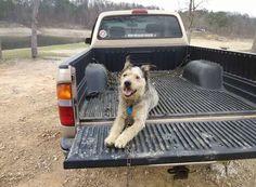 Un hombre con cáncer terminal pide ayuda para encontrar hogar a su perro #texas #eeuu #perro #perros #dog #dogs #historiasemotivas #noticia #noticias #schnauzi #mascota #mascotas #cancer #viral #estadosunidos