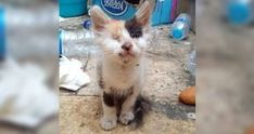 Man Saves Blind and Deaf Kitten and Raises Her into a Beautiful Calico Cat, Now 7 Months Later.