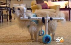 Guy Creates $40 Dog Wheelchair Hack for His Girlfriend's Dog