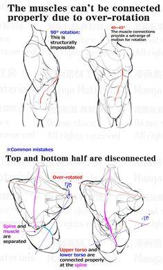 I think the poses are neat Man Anatomy, Anatomy Poses, Body Anatomy, Anatomy Study, Anatomy Art, Anatomy Drawing, Drawing Reference Poses, Body Reference, Anatomy Reference