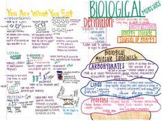 biology teacher A nice note page on biomolecules/macromolecules/organic compounds. Biology College, High School Biology, Biology Classroom, Biology Teacher, High School Science, Teaching Biology, Science Biology, Life Science, Forensic Science