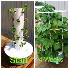 Juice plus tower garden.  www.conkey.towergarden.com