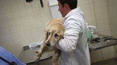 There are way more veterinarians than there is work for them to do, according to a recent survey by the American Veterinary Medical Association. Michigan Water, Flint Michigan, Michigan Usa, Dog Test, Stop Animal Cruelty, Animal Welfare, Pet Care, Hero, Canada Goose