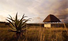 Hlosi Birdhide, Amakhala Bush Lodge, South Africa Africa Travel, Lodges, Wilderness, South Africa, Southern, Beach, Water, Into The Wild, Water Water