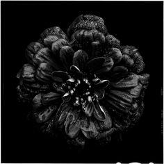 'Back to Black'byBettina Güber