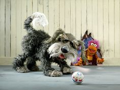 sprocket fraggle rock