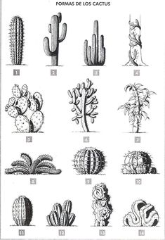 Good Images Cactus Flower silhouette Suggestions Cacti as well as plants are plants in which We've always favored in addition to being your drinking water w Mini Cactus, Cactus Flower, Cactus Plants, Garden Cactus, Garden Plants, Cactus Drawing, Watercolor Cactus, Kaktus Tattoo, Cactus Pictures