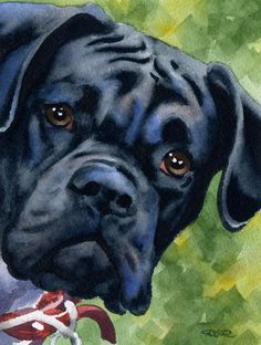 BLACK BOXER Dog Signed Art Print by Artist DJ by k9artgallery   WATERCOLOR