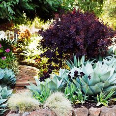 Fire and ice - Surprising Planting Pairings - Sunset