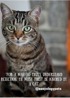 For a man to truly understand rejection, he must first be ignored by a cat! @easyologypets