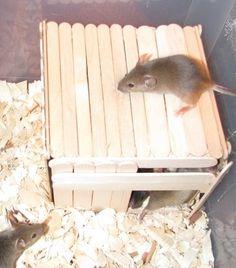popsicle stick | Popsicle Stick Mouse House | PetDIYs.com