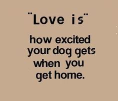 Love my dogs...... :)