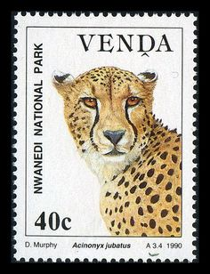 Venda 1990 Wildlife Conservation / Cheetah / Venda was a bantustan in… Small Wild Cats, Big Cats, Caracal, Wildlife Conservation, Vintage Stamps, Afrikaans, Stamp Collecting, South Africa, Countries