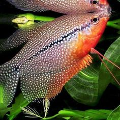 How To Get Started With Salt Water Fishing – Fanel Sport Salt Water Fish, Salt And Water, Fresh Water, Tropical Fish Aquarium, Freshwater Aquarium Fish, African Frogs, Biotope Aquarium, Fish For Sale, Fishing Photography