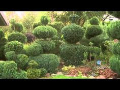 Maja w ogrodzie - Wyprawa nad morze  - Ogrody Magra, drzewko i ozdoby św...