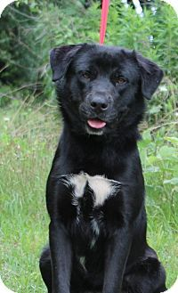 Prattville, AL - Labrador Retriever Mix. Meet Falcon 20511, a dog for adoption. http://www.adoptapet.com/pet/10902856-prattville-alabama-labrador-retriever-mix