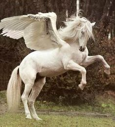 In Greek mythology, Pegasus (Πήγασος, Pégasos) was a winged horse sired by Poseidon, in his role as horse-god, and foaled by the Gorgon Medusa. He was the brother of Chrysaor, born at a single birthing. By extension, the term Pegasus is often used to refer to any winged horse.