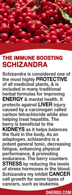 Schizandra is considered 1 of the most highly protective of all medicinal plants, included in many traditional herbal formulas for improving energy mental health. It protects against liver injury helps treat hepatitis. Beneficial to the kidneys as it helps balances the fluid in the body. As an adaptogen, it's a potent general tonic, decreasing fatigue, enhancing physical performance, promoting endurance. It counters stress by reducing stress hormones in the blood. #dherbs