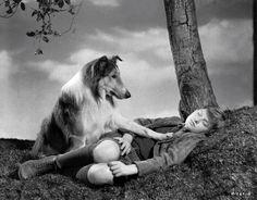 Where's Lassie?