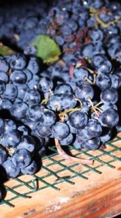 Local wine making tour of Umbria ... yes please :)