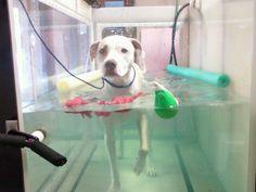 Underwater tread mill - Rehabilitating post knee surgery