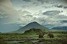 Africa - Andy Mahr