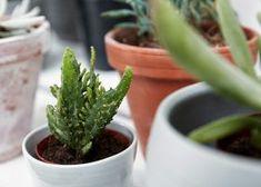 Plant, keuken, details