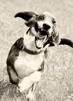 A basset hound running - never fails to make me laugh