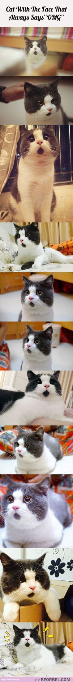 """Meet The Cat With The Perpetual """"OMG"""" Face…"""