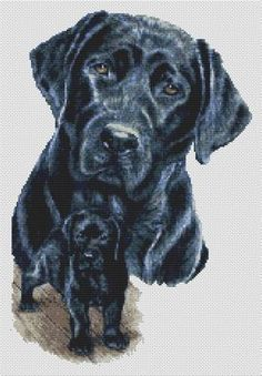 This is the latest cross stitch I'm working on!