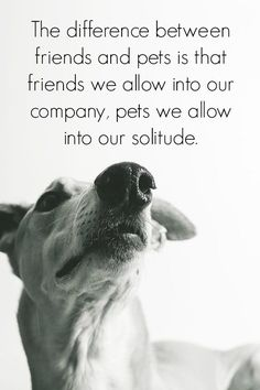 invite dogs into your life, and it will become full! #dog #dogs #pets #quote #saying | www.fordogtrainers.com