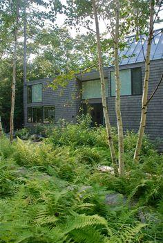 house behind excellent ferns. Richardson & Associates