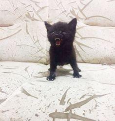 11. Un chaton pas très content