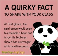 A quirky fact about pandas to share with your class - from Treetop Displays. Visit our TpT store for printable resources by clicking on the provided links. Designed by teachers for Pre-Kindergarten to Grade. Fun Facts For Kids, Fun Facts About Animals, Animal Facts, Wtf Fun Facts, Facts About Pandas, Funny Facts, Teaching Quotes, Teaching Tips, Learning Centers