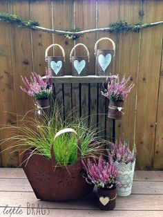 These are going to look amazing in your fall garden!