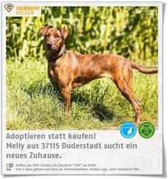 Melly wurde 2015 im Tierheim Duderstadt abgegeben.  http://www.tierheimhelden.de/hund/tierheim-duderstadt/dobermann_boxer_mischling_/melly/9897-0/  Melly ist stubenrein und Menschen, auch Fremden, sehr aufgeschlossen gegenüber. Sie strahlt vor Energie und Lebensfreude und lernt sehr gerne. Das muss sie auch manchmal, da Artgenossen und andere Tiere überhaupt nicht ihres ist. Eine Hundeschule würde Melly sicher gut tun.