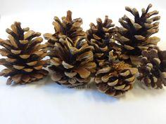 INERRA® Austriaca Cones