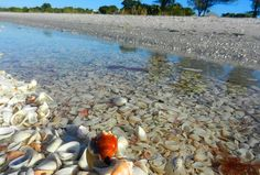 What makes Sanibel special – and 9 ways to experience it- LOVE #3 about shelling