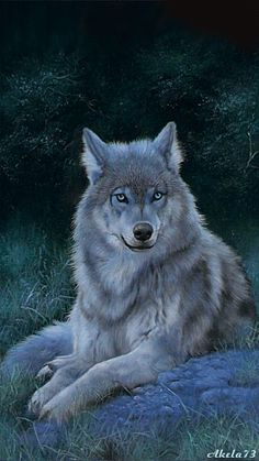 A Wolf Resting on a Rock in Early Night. Wolf Love, Beautiful Creatures, Animals Beautiful, Cute Animals, Wild Animals, Wolf Spirit, My Spirit Animal, Animal Espiritual, Tier Wolf