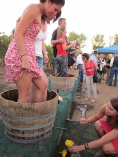 Grape Stomping. So much fun especially at the Sonoma County Harvest Fair!
