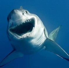 """ Hi hi, I am Sharky and I am lucky!"""